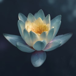 White lotus with yellow centre opening